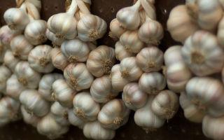 Чеснок от геморроя: целебные свойства и народные рецепты