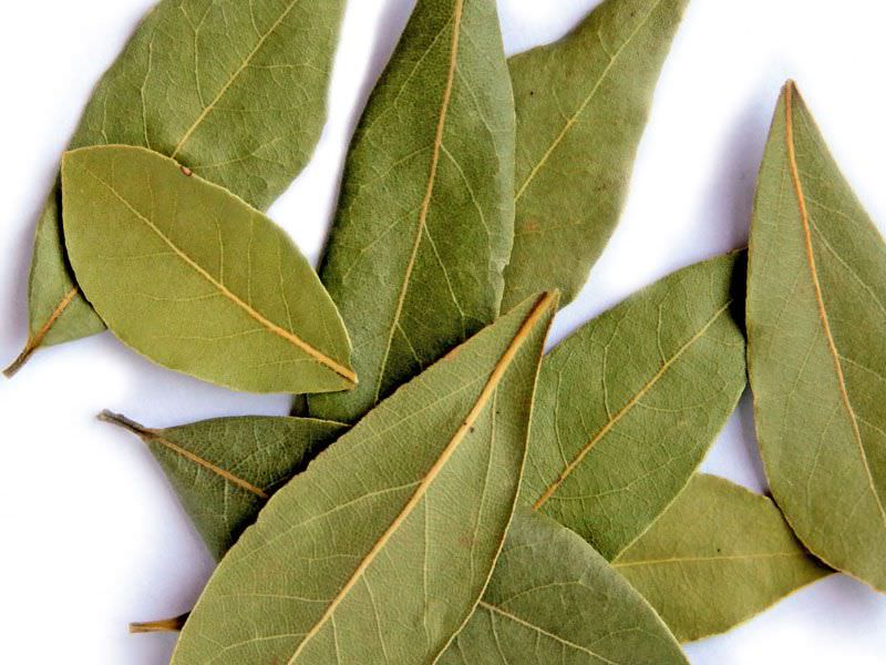 лавровые листы